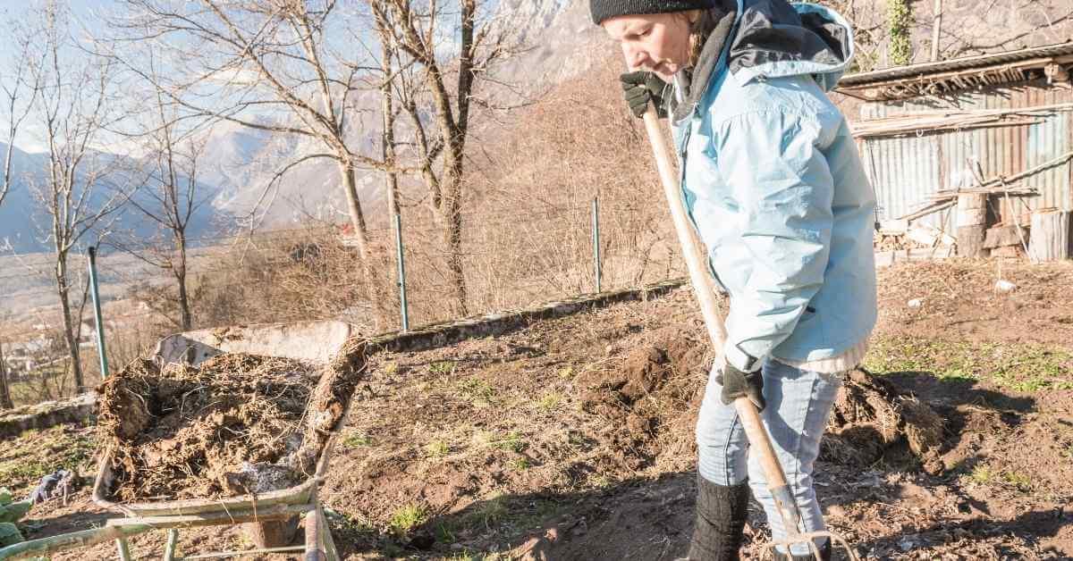 大根 土作り (1)肥料