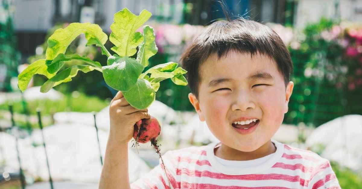 大根 収穫 (3)